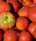 Pompoenseizoen! Alles over pompoen, inclusief GRATIS recepten (3)