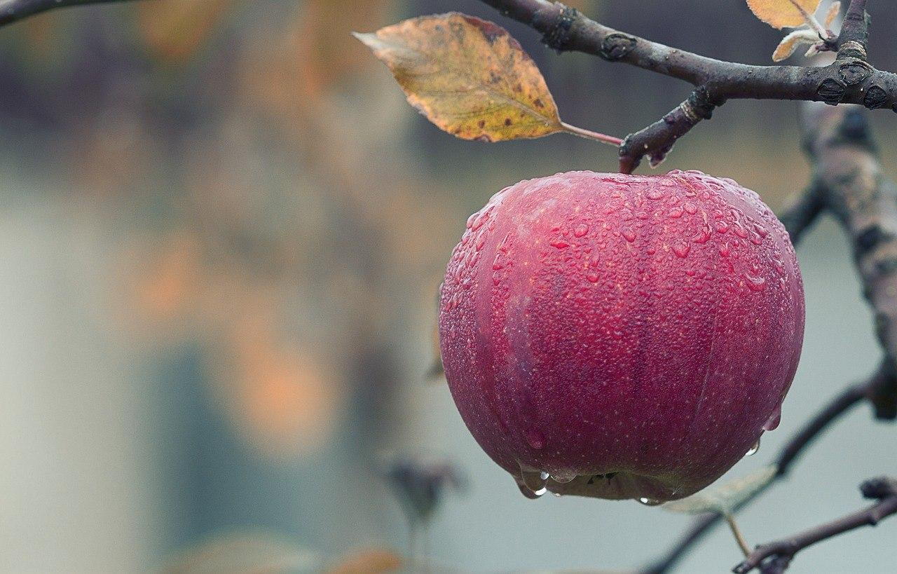 Nederlands fruit, zoals een appel, hoort bij slanke herfstrecepten.